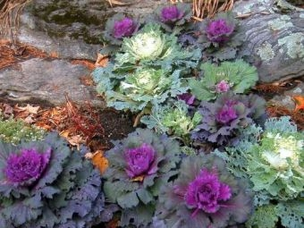 visit the vermont garden journal - Fall Garden Plant