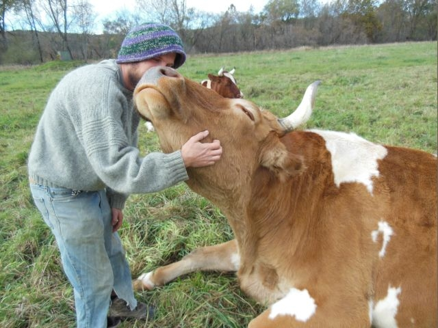 oxen_kiss.jpg