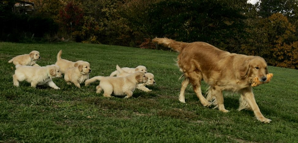 dogs and puppies. Images Dogs and Puppies