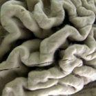 03_01_brain_square_2.jpg