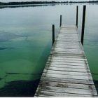 algae0601_300.jpg