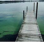 algae200.jpg