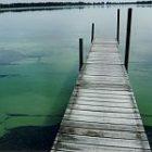 algae_2.jpg