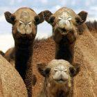 animalminds2.jpg