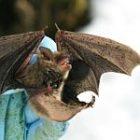 bat_2.jpg
