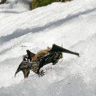 bat_on_snow_vt_fish_wildlife_department.jpg
