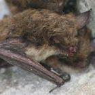 bats_05_300.jpg