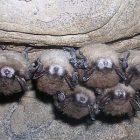 bats_3.jpg
