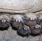 bats_300.jpg