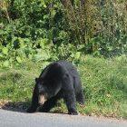 bear_0419.jpg