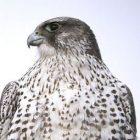 birdnote111231_2.jpg