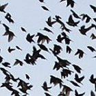 birds_150.jpg