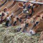 dairy_2.jpg