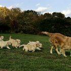 dogs_340x255.jpg