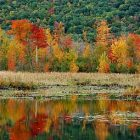 fall_folliage_340x255.jpg