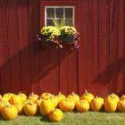 fall_gardening2_1003.jpg