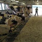 farm_3.jpg