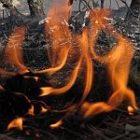 fire_150_2.jpg