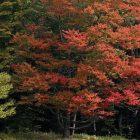 foliage_2.jpg