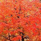 foliage_600.jpg