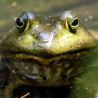 frogweb2.jpg