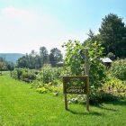garden_600.jpg