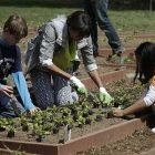 michelle_obama_gardening_with_vt_kids_040413_ap_photopablo_martinez_monsivais_ap838356960276_1.jpg