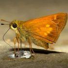 moth4web.jpg