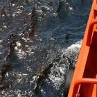 oily_water_ap_gerald_herbert_2.jpg