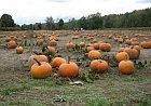 pumpkins140.jpg