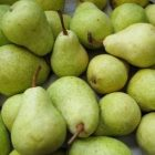 reebob_pears.jpg