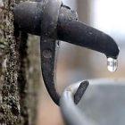 sugar_tap_2.jpg