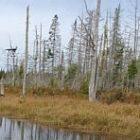 wetland_300.jpg