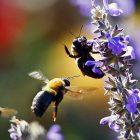 white_house_bees_600x450.jpg