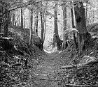 woods160.jpg